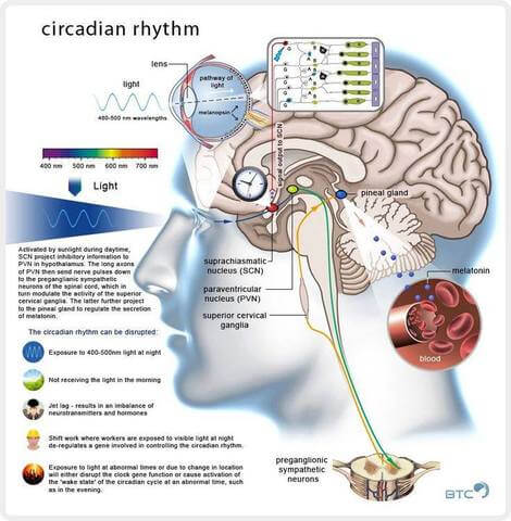 Circadian_Rhtym_large