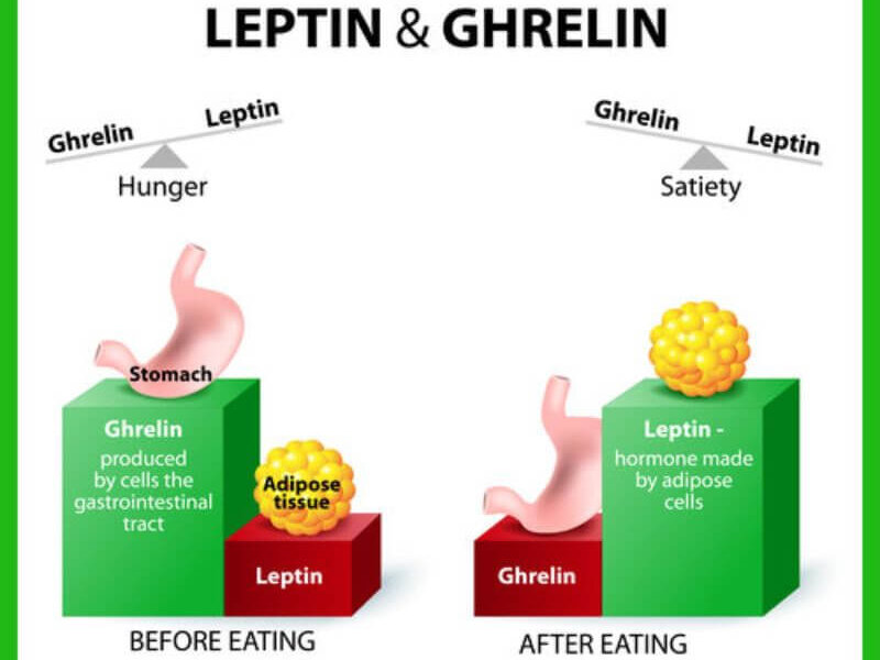 Grelin leptin see saw