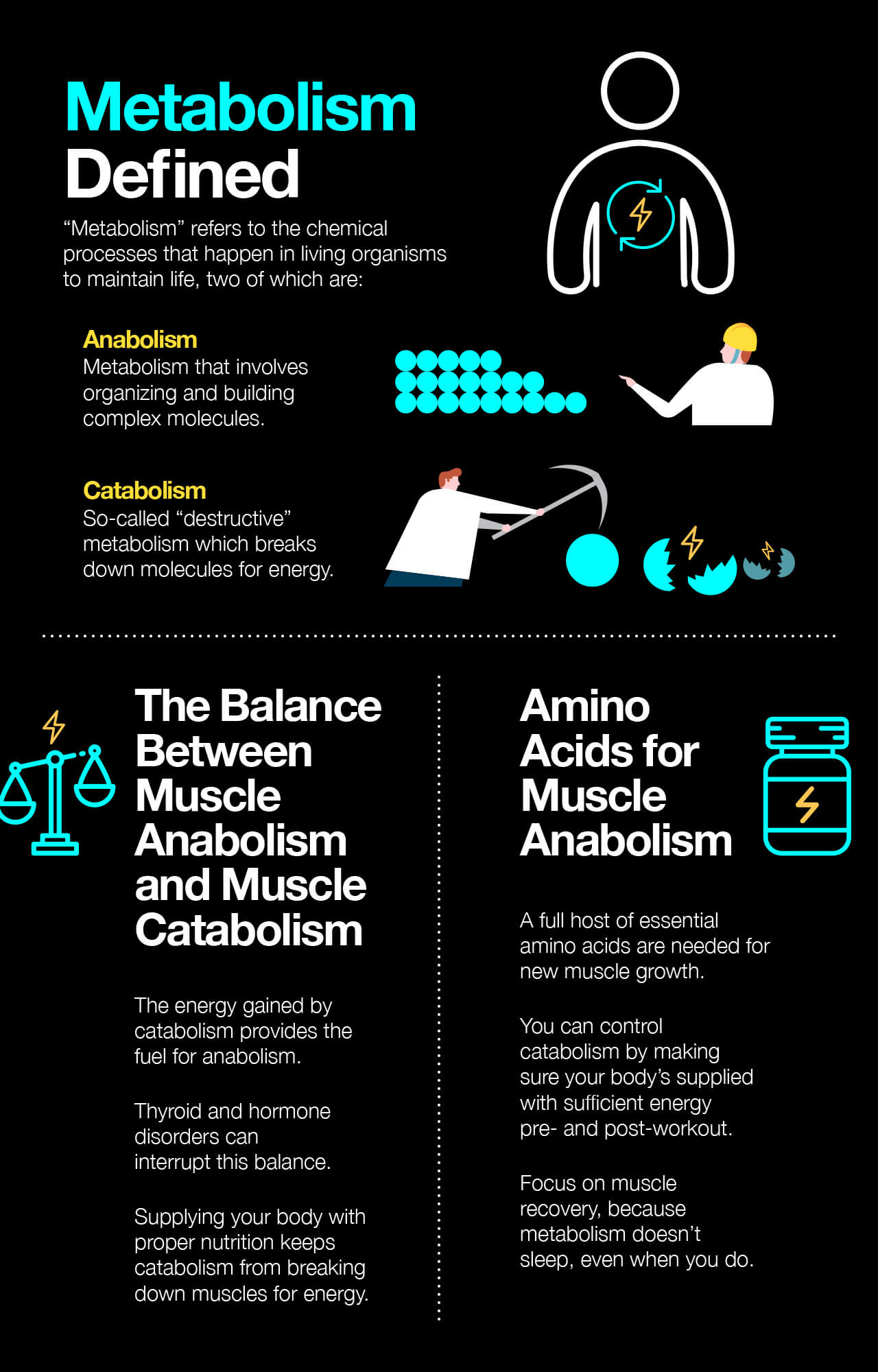 Infographic_MuscleAnabolism_1280x2000